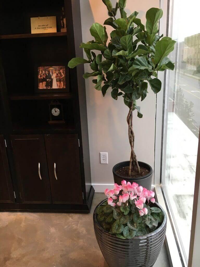 Jill's Office Plants